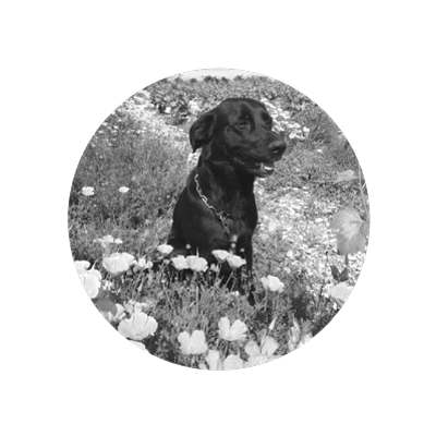 chien-domaine-viticulteur