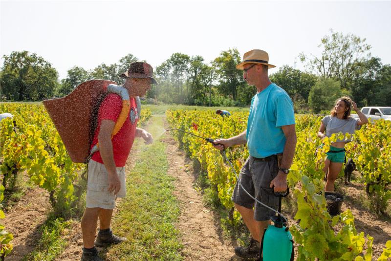 vignerons-vendanges